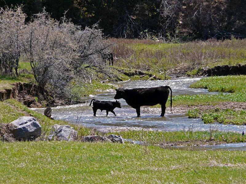 livestock and endangered species