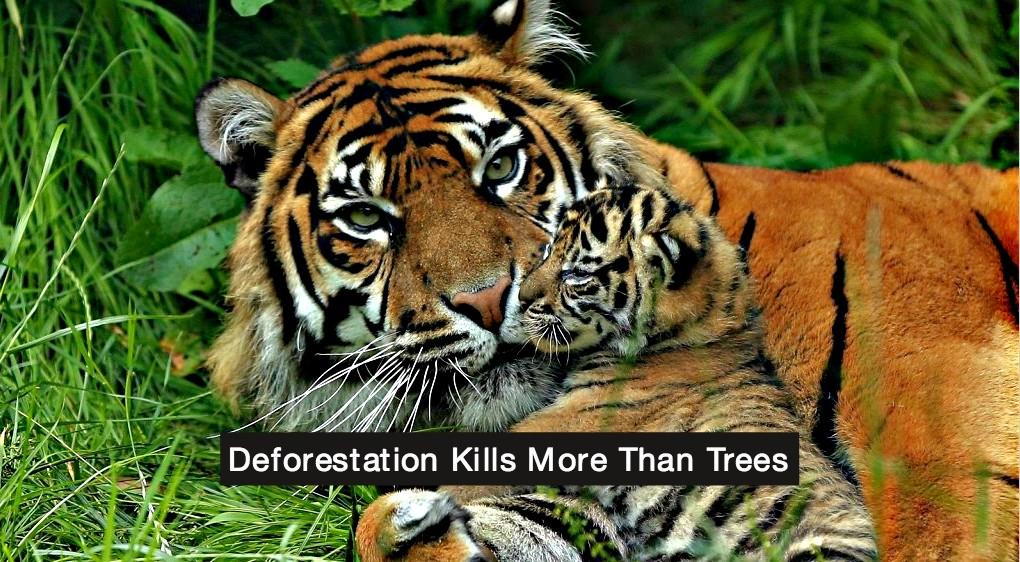 Indonesia wildlife conservation
