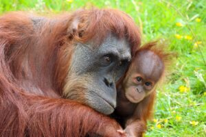 palm oil plantations and endangered species