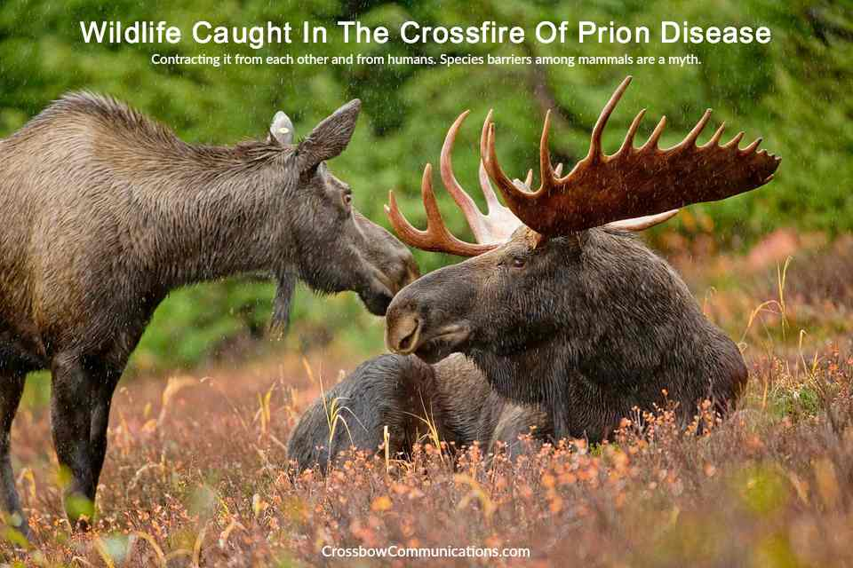 chronic wasting disease wildlife